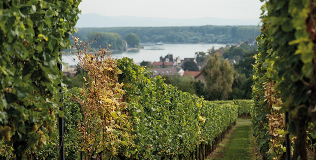 Rheinhessen