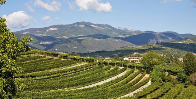 Valpolicella – Klassiker von den Hügeln Veronas