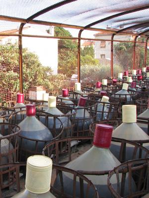Der Süsswein liegt nach dem Abstoppen bis zu 20 Jahren in Fässern oder dickwandigen Glasballons