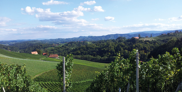 Weinhandel Ullrich – Abwechslung im Weinangebot