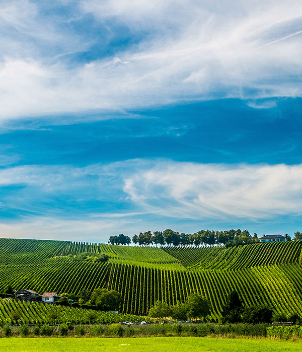 Weinbaugebiet an der luxemburgischen Mosel. Noch heute wird hier Crémant produziert.