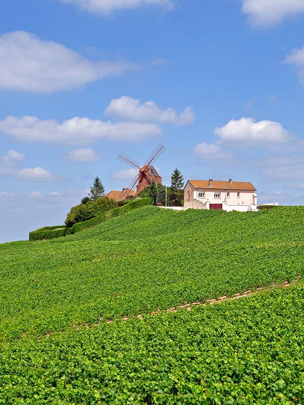 Zahlreiche grössere und kleinere Familienbetriebe aus der Champagne existieren noch heute