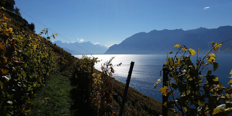Platin-Lorbeeren für das Waadtland am Genfer See
