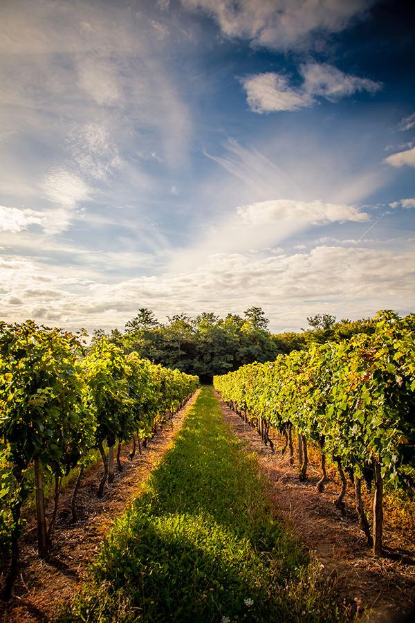 Weinbau in der Champagne