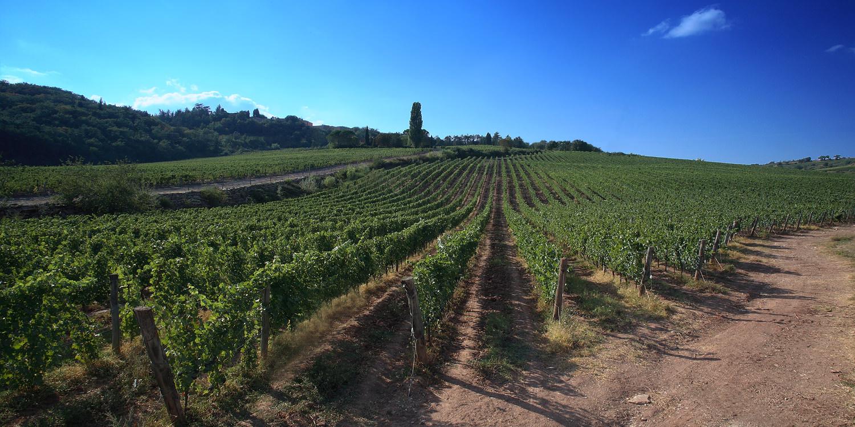 Carpineto – Weltklasse-Weine aus der Toskana