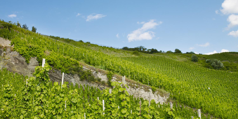 Berühmte Weinlagen – Bernkasteler Doctor