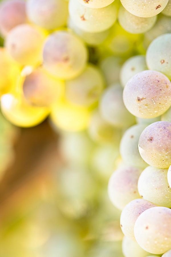 Chardonnay aus dem Montrachet - wie berechtigt ist sein Ruf?