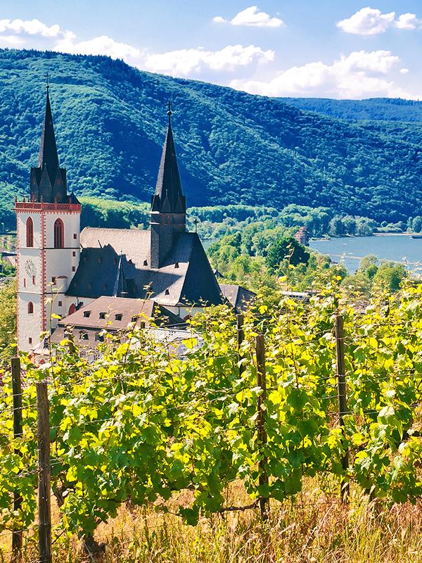 In der Pfalz entstehen Süssweine aus Muskateller-Trauben