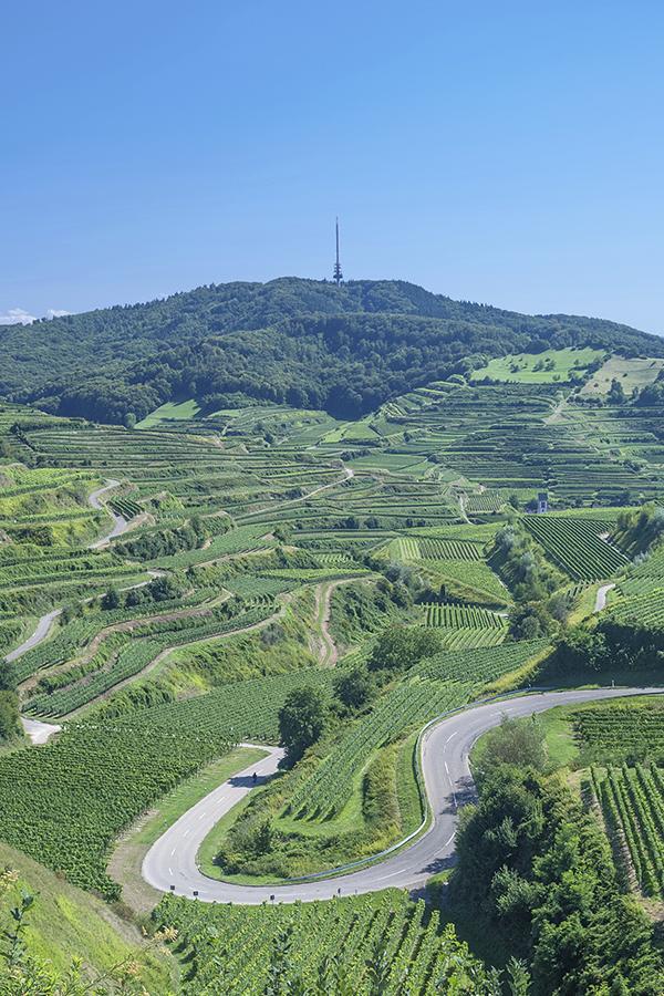 Der südbadische Kaiserstuhl: Seit Beginn der 1990er-Jahre dürfen hier auf offiziell Chardonnays entstehen
