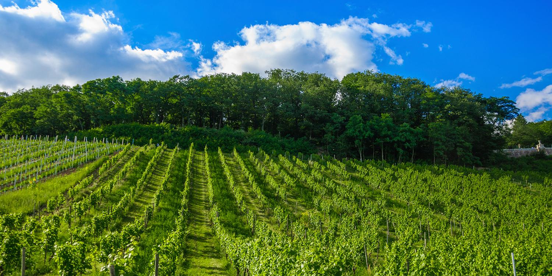 Diese deutschen Weinregionen müssen Sie kennen