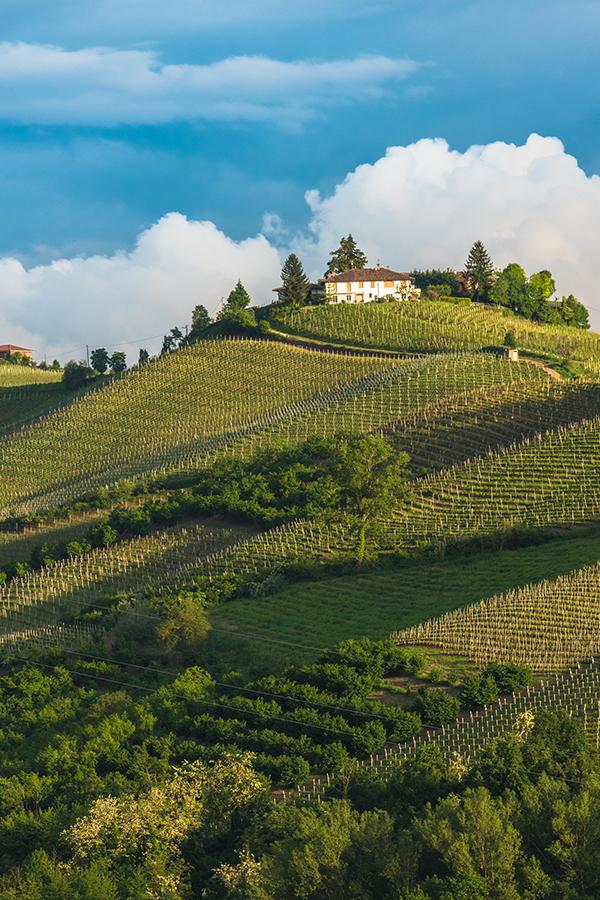 Weinberge in der Region Piemont