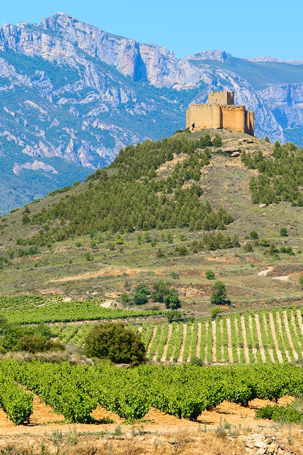 Weinberge in der spanischen Region Rioja