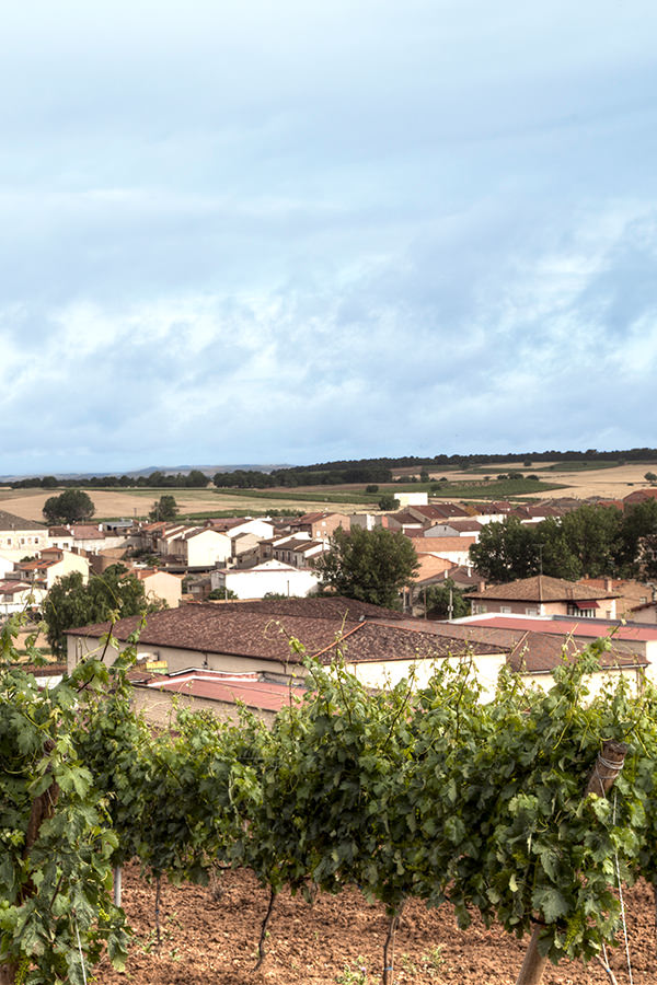 Weinberge in der spanischen Region Ribera del Duero