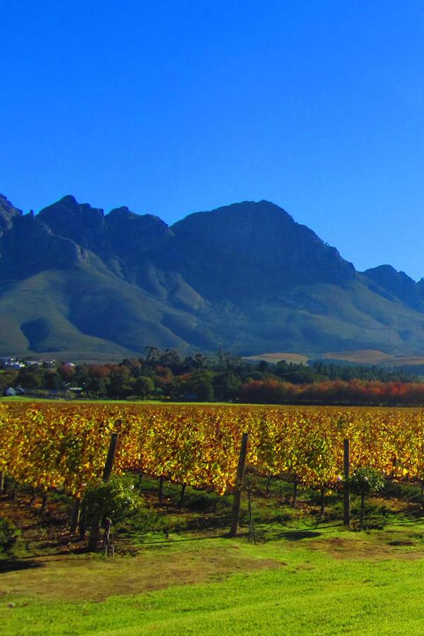 Weinlandschaft in der Region um Kapstadt