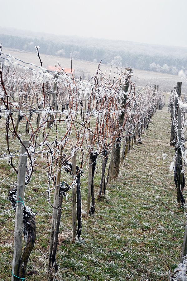 Frostige Zeiten dieses Jahr für Landwirte