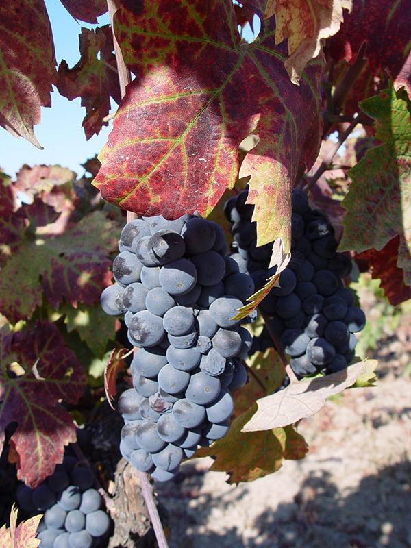Mittlerweile gibt es in Portugal auch tolle Rotweine