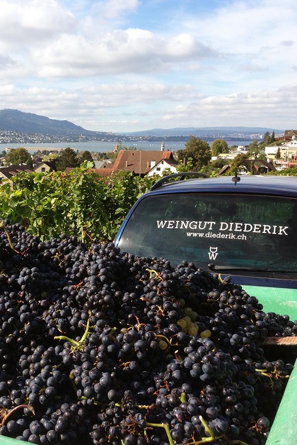 Grosse Sorgfalt und Hingabe für guten Wein