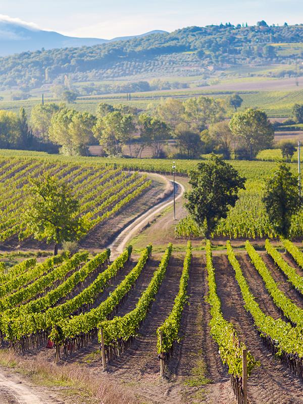 Weitläufige Anbauflächen in der Toskana