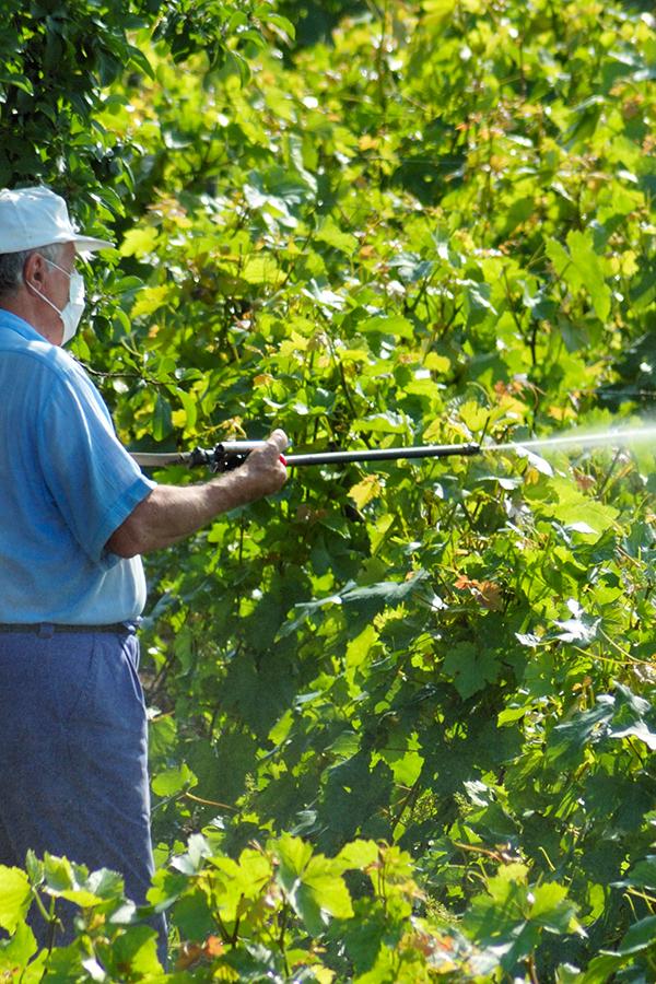 Verbotene Fungizide im Umlauf?
