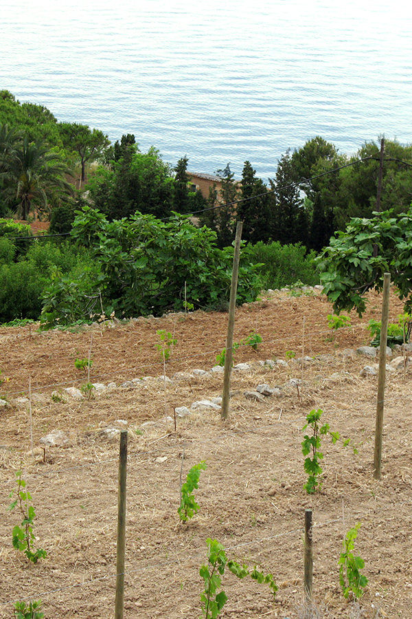 Steillagen erschweren die Arbeit am Weinberg