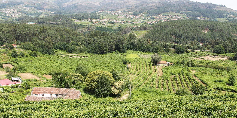 Vinho Verde – Gar nicht so grün hinter den Ohren