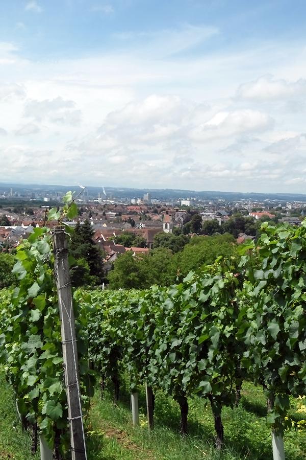 Schöne Aussicht von den Weinbergen